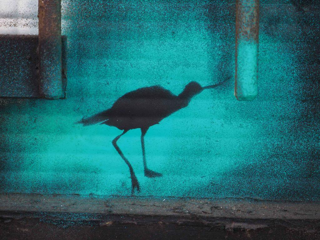 ein schwarzer Wasservogel vor türkisem Hintergrund