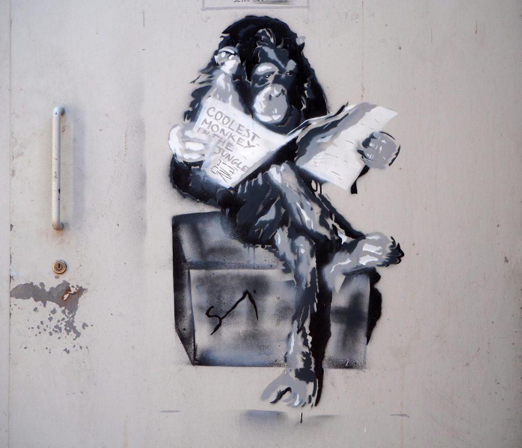 Affe liest Zeitung